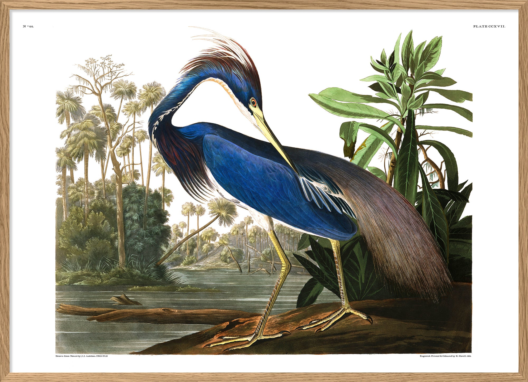 "Louisiana Heron print Poster Art Vintage Reproduction Dybdahl 12x16"" 30x40cm"