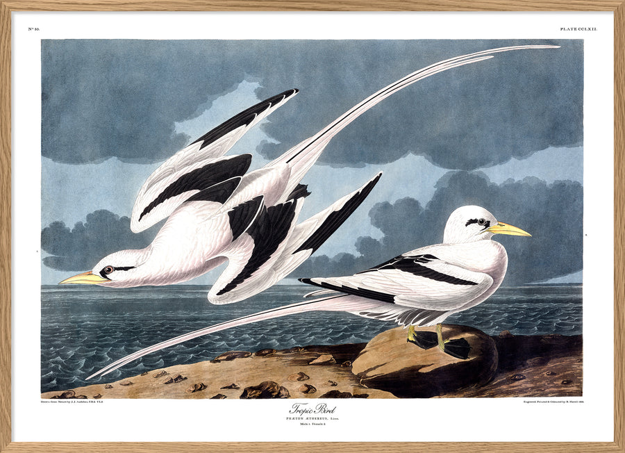 Audubon reproduction Pelagic Sea Birds print poster from Dybdahls Birds of America series in Canada