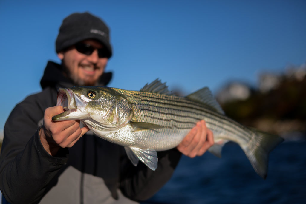 Striper Fly Fishing New England