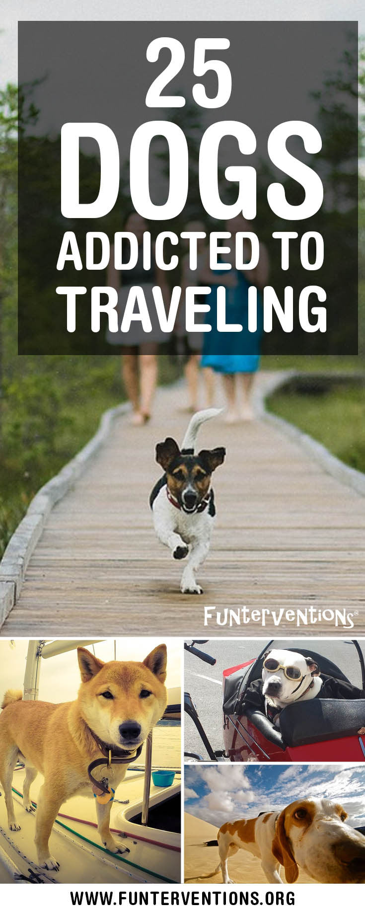 25 Dogs Who Are Addicted To Travel | Brought to you by Funterventions.org | Travel Dogs | Adventure Dogs | Travel With Dogs | Traveling Dogs | Dogs Love Travel Too
