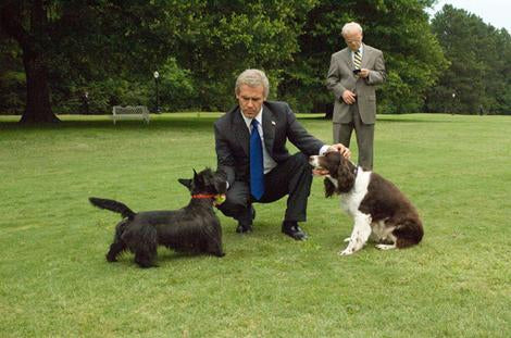 Presidential Pets 50 Years Of Cat And Dogs In The White House
