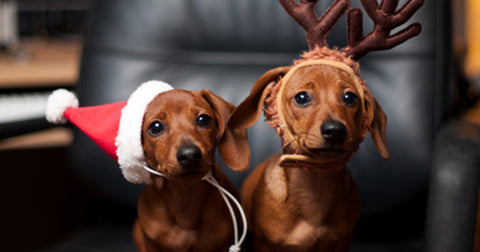 Pet Related Christmas Cards