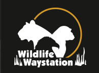 FTLA Apparel Now A Monthly Supporter of Wildlife WayStation