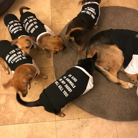 FTLA Apparel ~ For The Love of Animals Apparel:  Doggy Clothes - New Cotton 3/4 Sleeve Dog Raglan Tee - Be Kind To Animals OR My Daddy Will Kill You!