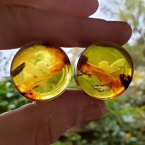 "Amber Bee Plugs - 26mm (1"")"