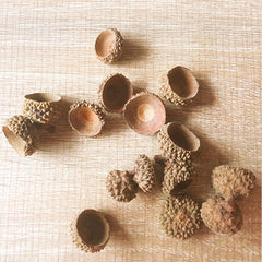 Needle felting supplies Acorn Caps Set of 50 Natural Jewelry Nature Rustic Autumn Crafts Natural Acorn Supply