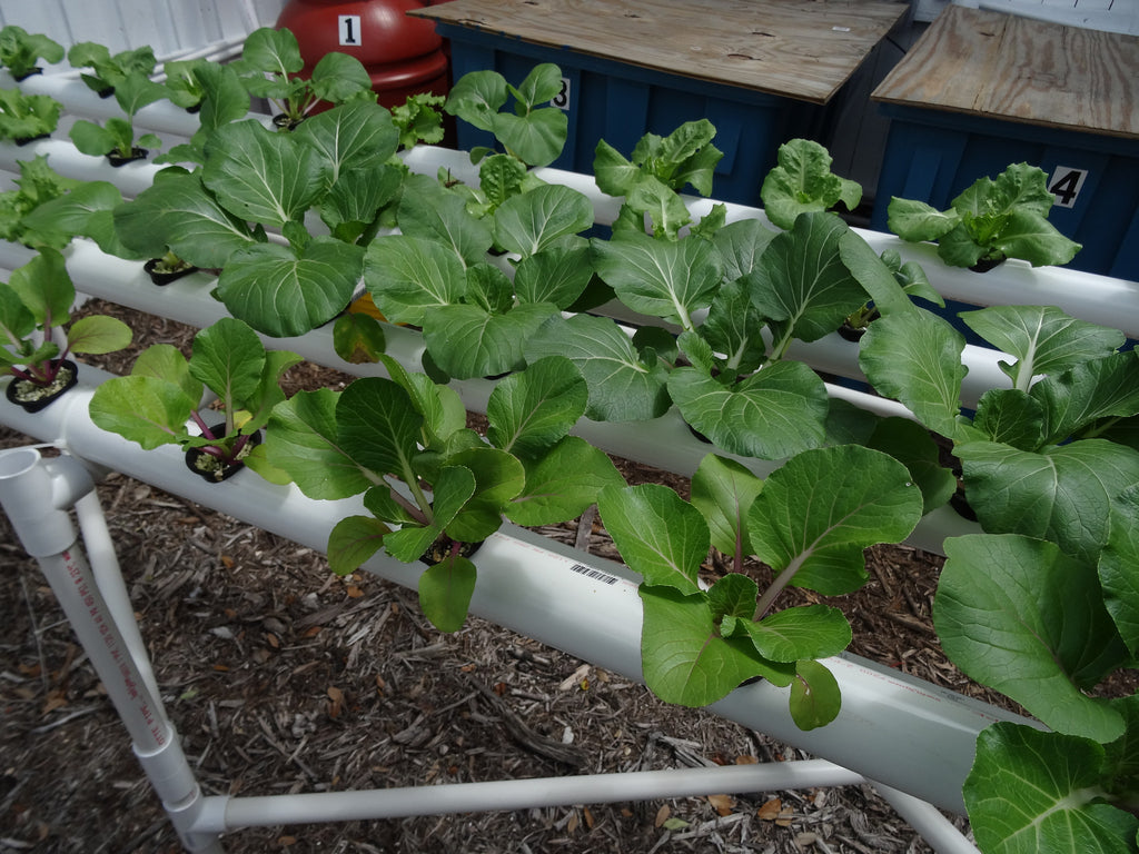 Basic Pointers on Your New Hydroponic System