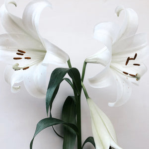 Christmas Lilies - Pre Order for December 23rd