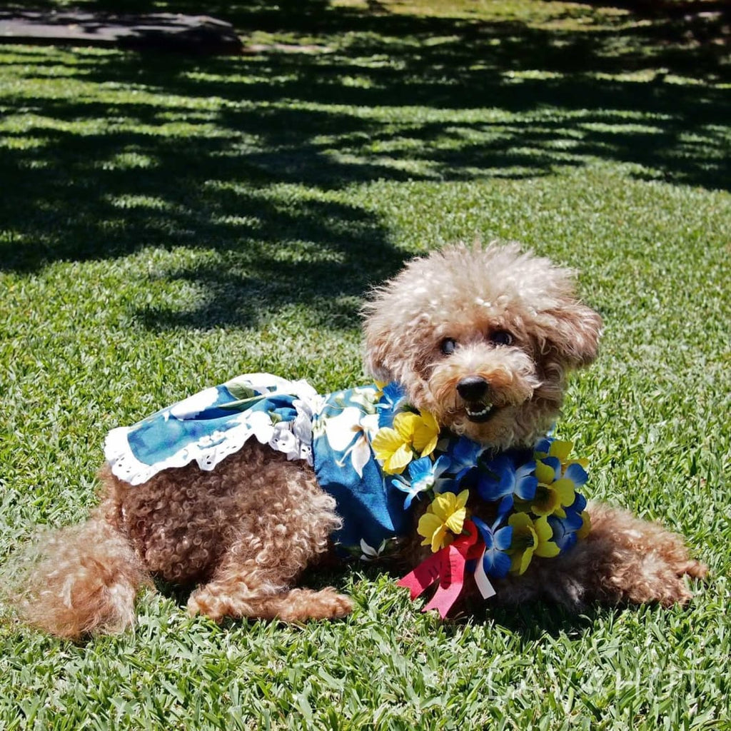 Ginger Blue Hawaiian Dog Dress - Dog