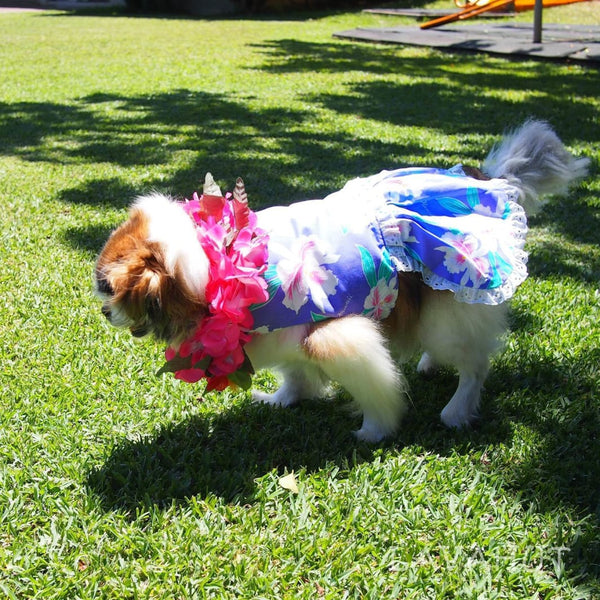 Luau Purple Hawaiian Dog Dress - Dog