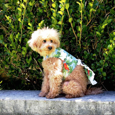 Parrot Blue Hawaiian Dog Dress - Dog