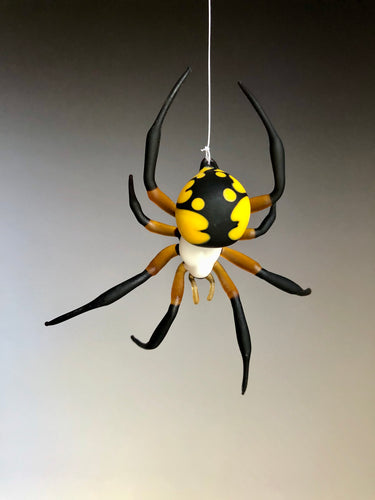 Glass Argiope Spider