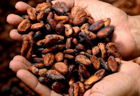 Cocoa beans - Gin Pairing with chocolate blog