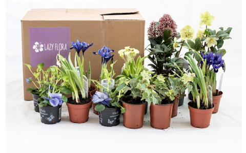 wedding gifts plant monthly subscription