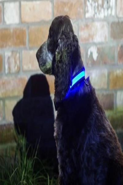 Light Up Pet Collar - Free Souls Boutique