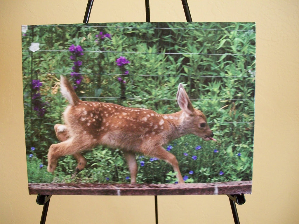 "Wall Art - Fawn Frolic - Art Print - 16"" x 20"""