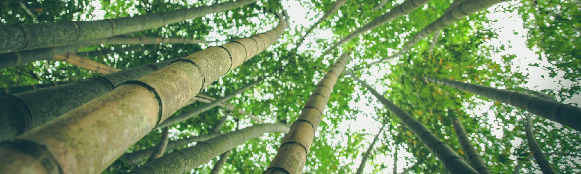 10 Powerful Benefits of Bamboo Clothing for You and the Environment