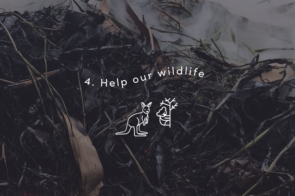 Help our wildlife