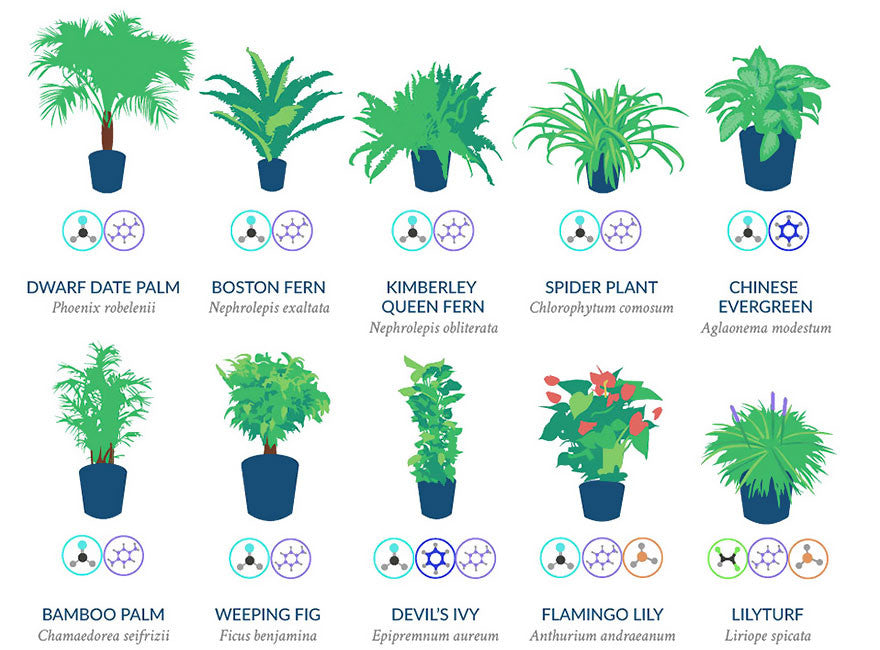 Best air filtering houseplants - NASA