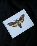 Death's-Head Hawkmoth Greeting Card - Open Sea Designs