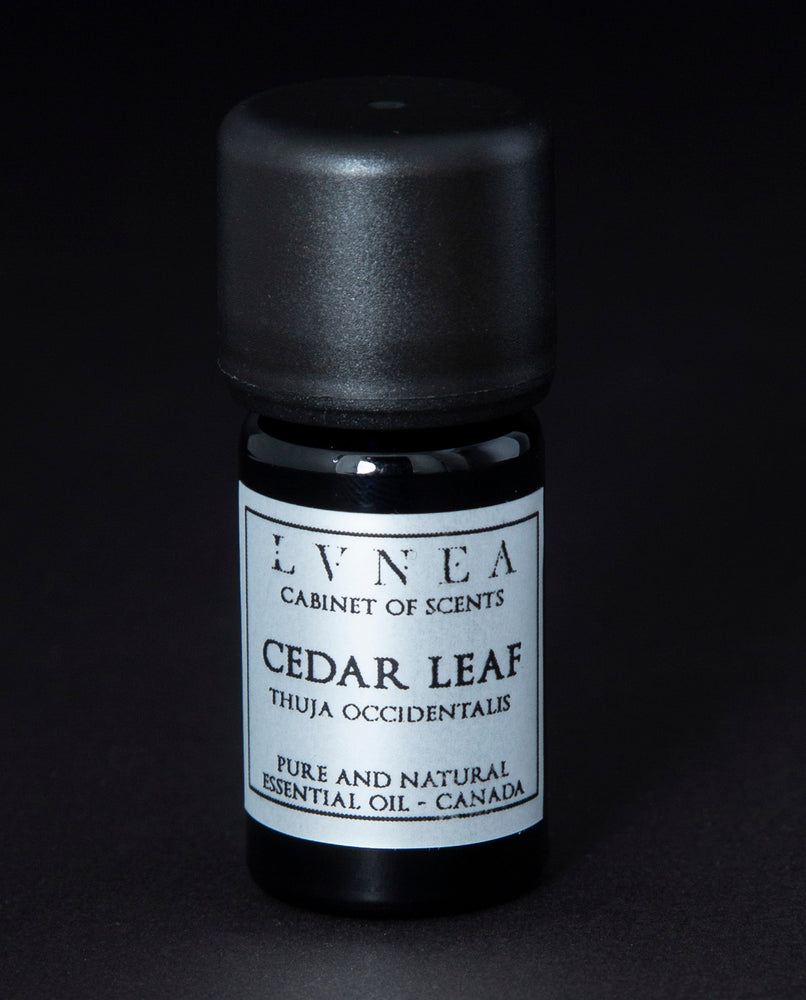 Cedar Leaf - Pure Essential Oil