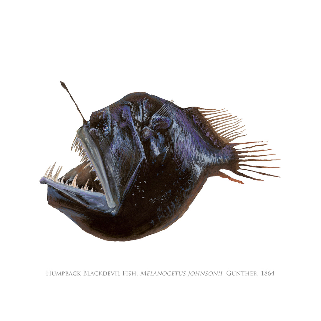 Humpback Blackdevil Card - Stick Figure Fish Illustration