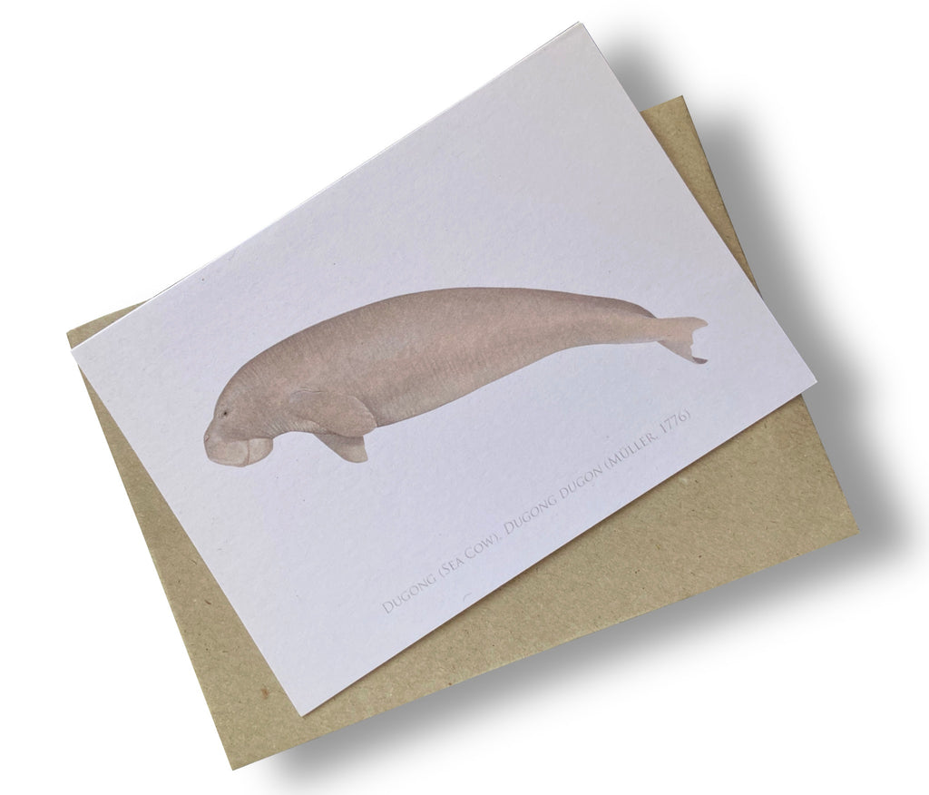 Dugong (Sea Cow) Card - Stick Figure Fish Illustration