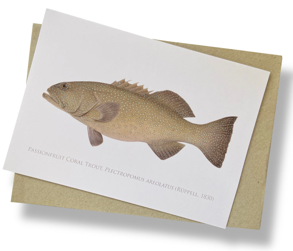 Passionfruit Coral Trout Card - Stick Figure Fish Illustration