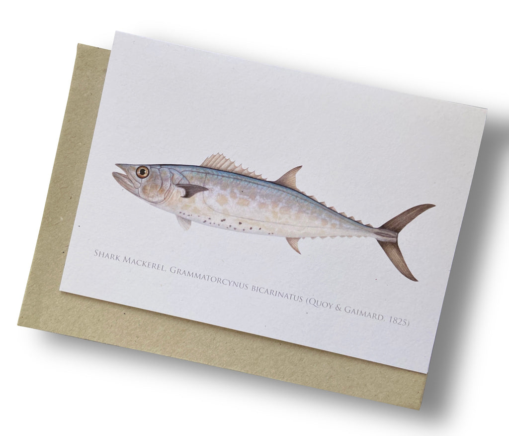 Shark Mackerel Card - Stick Figure Fish Illustration