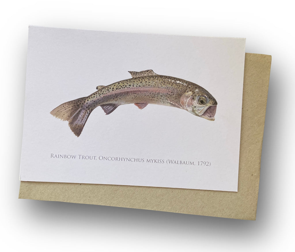 Rainbow Trout Card - Stick Figure Fish Illustration