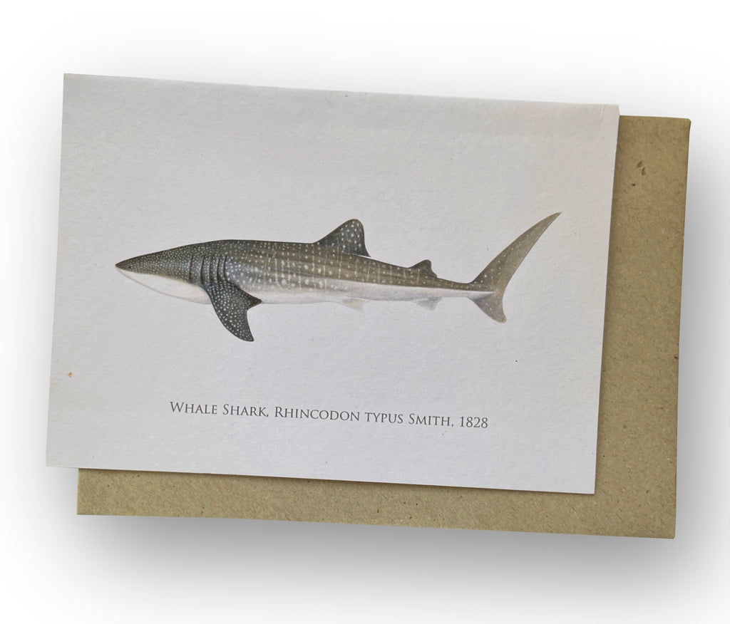 Whale Shark Card - Stick Figure Fish Illustration