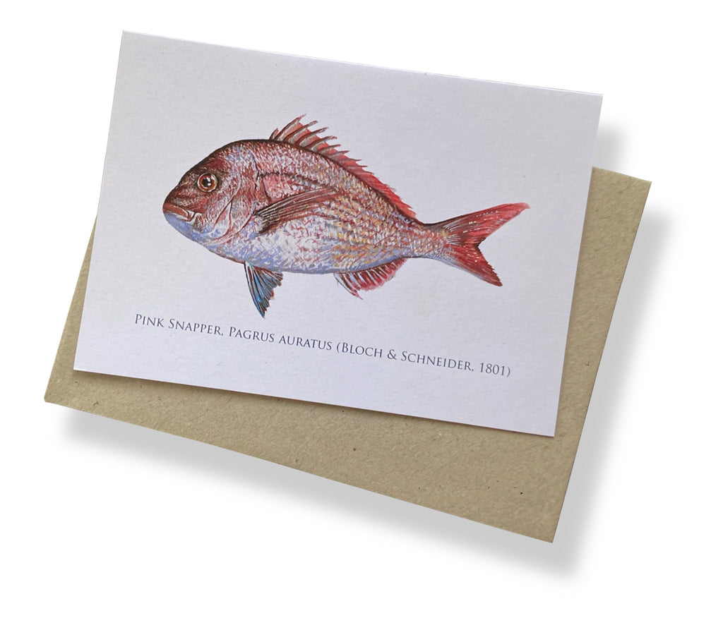 Pink Snapper Card - Stick Figure Fish Illustration