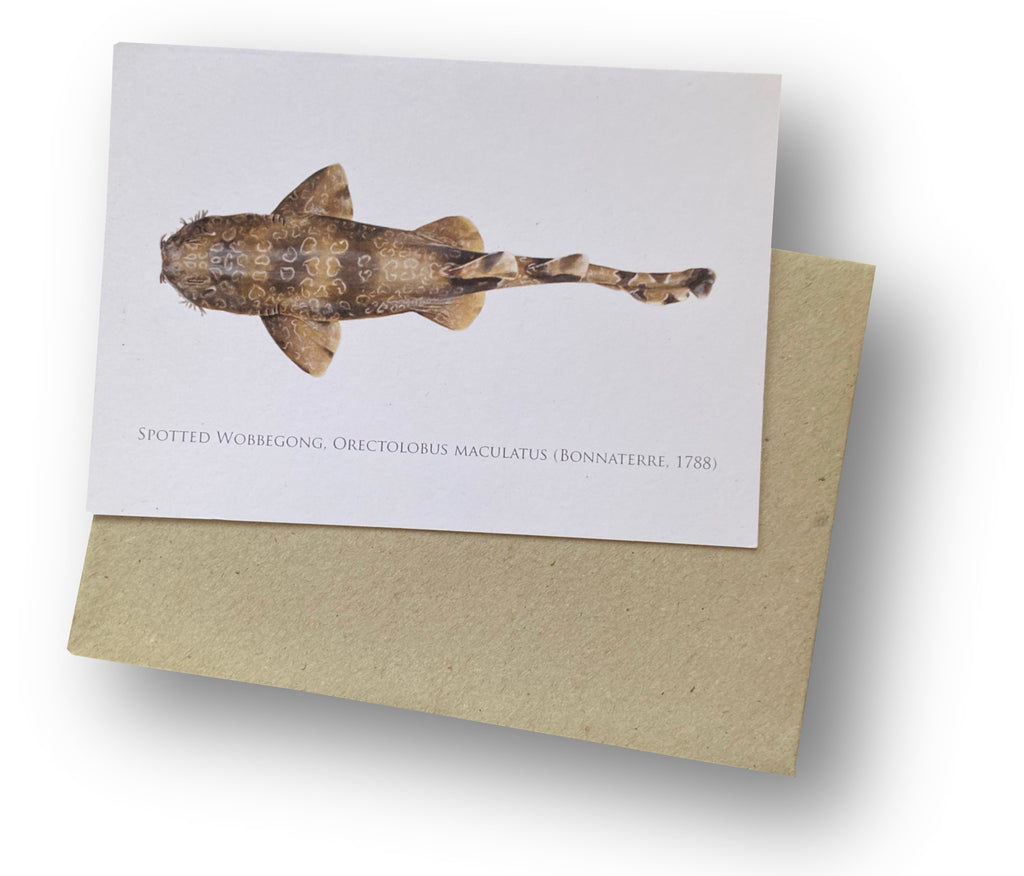Spotted Wobbegong Card - Stick Figure Fish Illustration