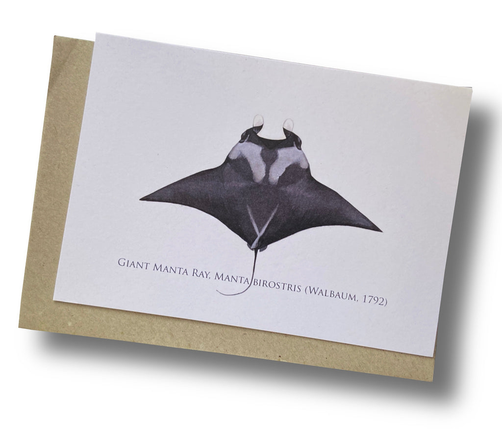 Giant Manta Ray Card - Stick Figure Fish Illustration