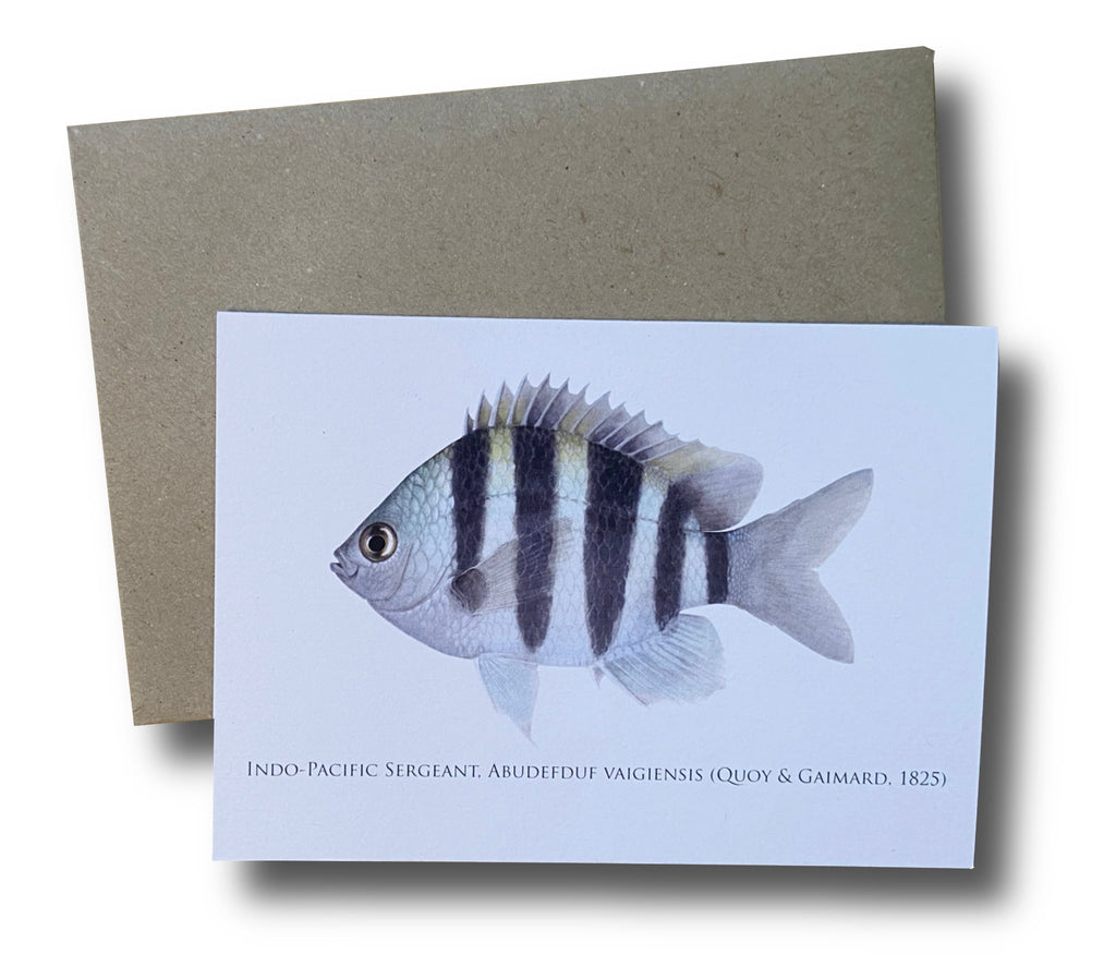 Indo-Pacific Sergeant Card - Stick Figure Fish Illustration