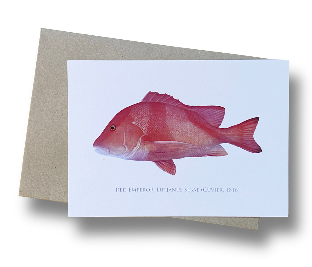 Red Emperor Card - Stick Figure Fish Illustration