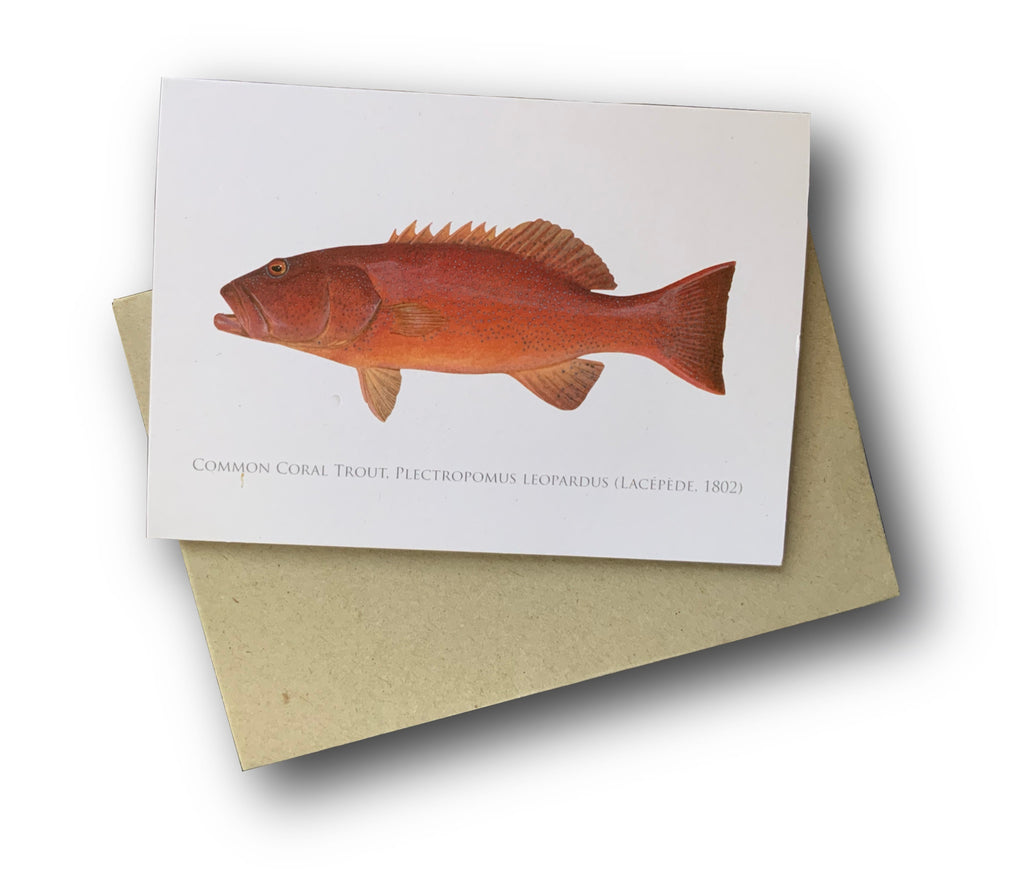 Common Coral Trout Card - Stick Figure Fish Illustration