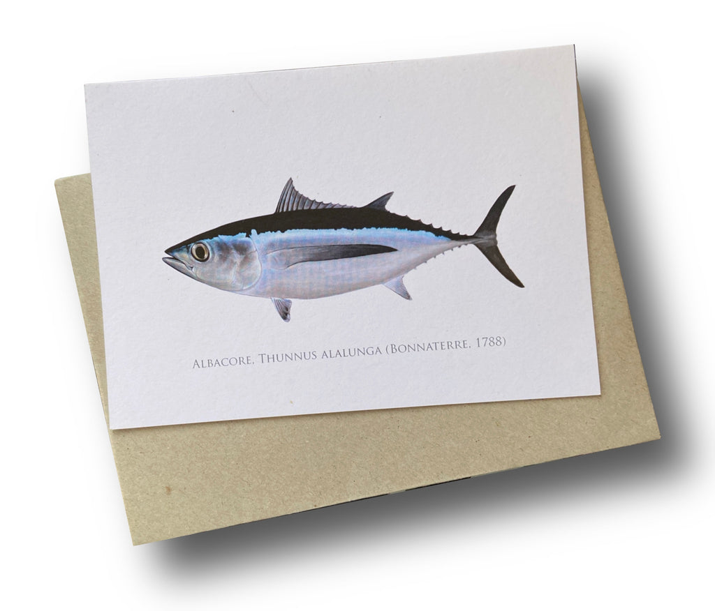 Albacore Card - Stick Figure Fish Illustration