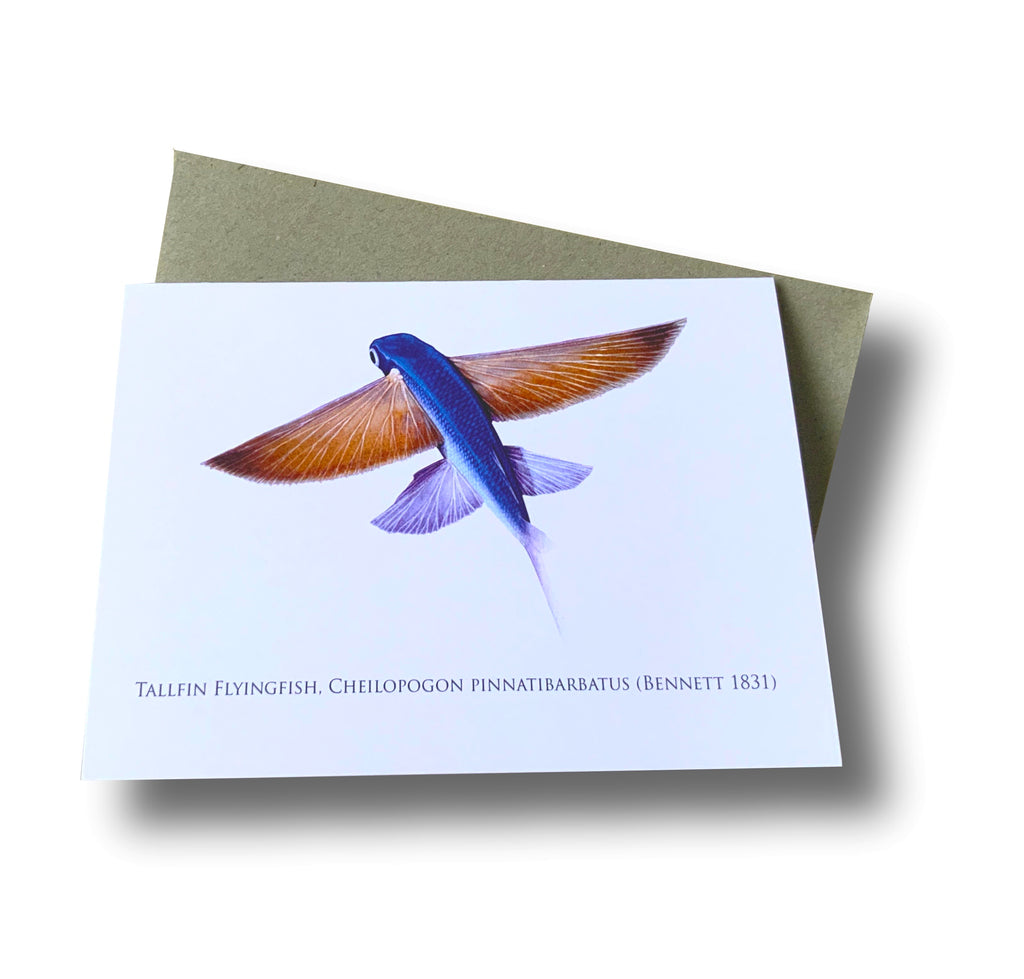 Tallfin Flyingfish Card - Stick Figure Fish Illustration