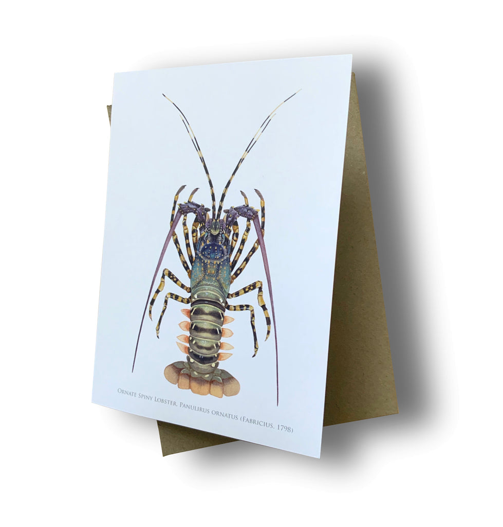 Ornate Rock Lobster Card - Stick Figure Fish Illustration