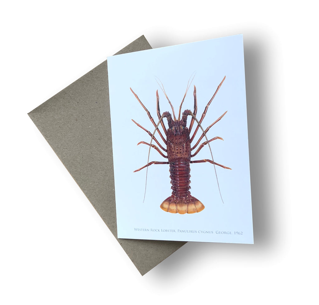Western Rock lobster Card - Stick Figure Fish Illustration