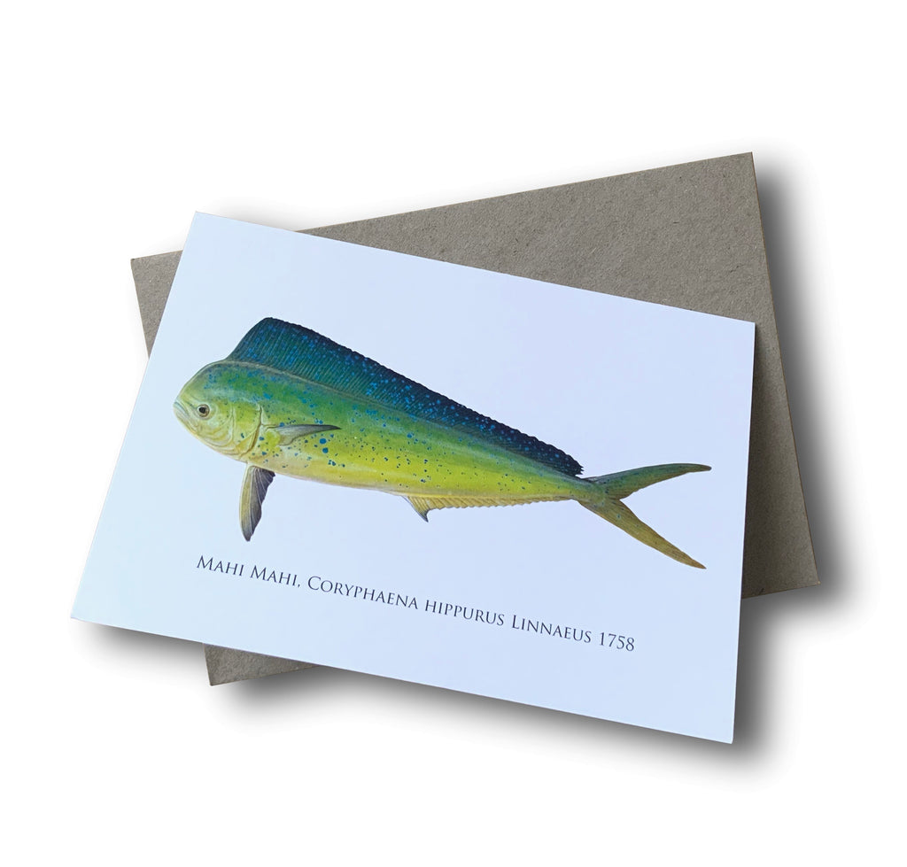 Mahi Mahi Card - Stick Figure Fish Illustration
