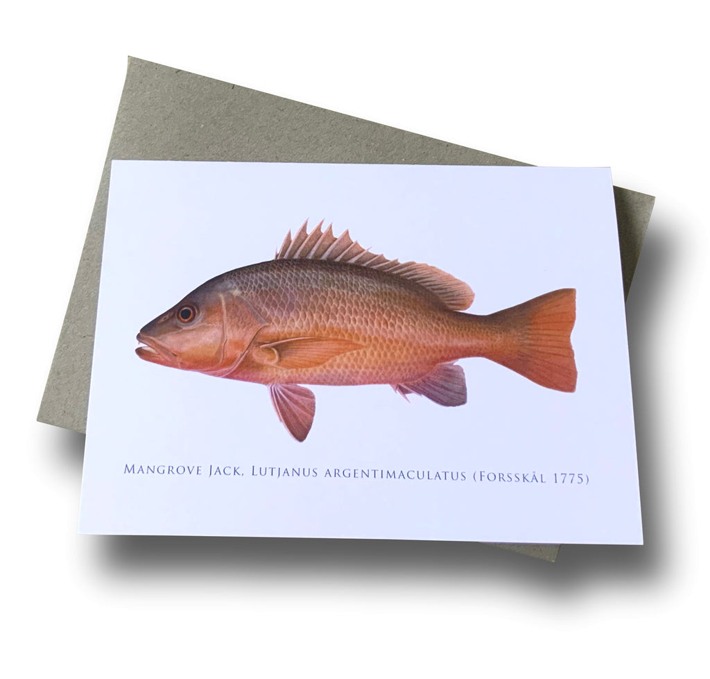 Mangrove Jack Card - Stick Figure Fish Illustration