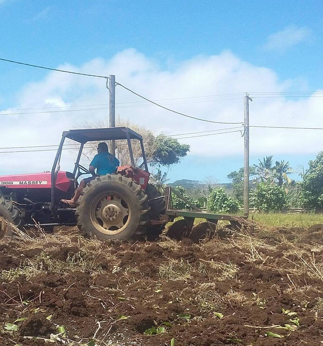 Plowing and fencing our future fields of Kava - October 25 - 2017