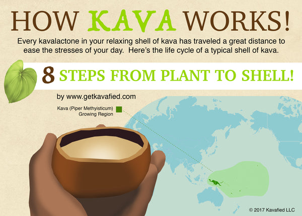 How Kava Works - An illustrated guide on how Kava goes from plant to shell