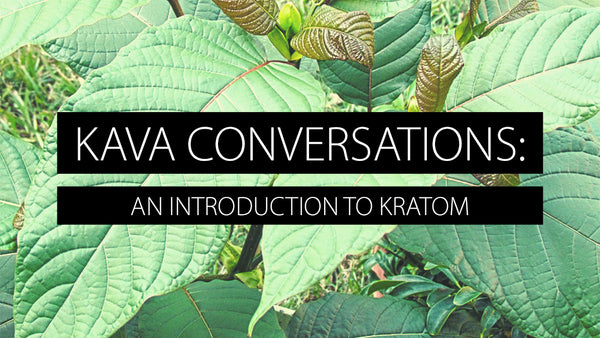 Kava Conversations: An Introduction to Kratom