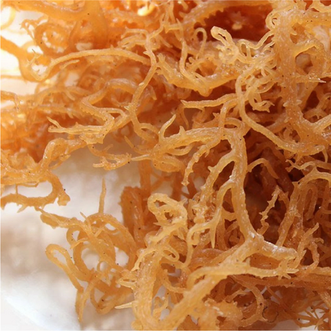 Raw wild craft SEA MOSS