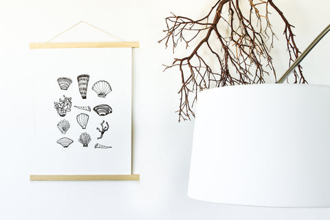 Seashell Collection wall art