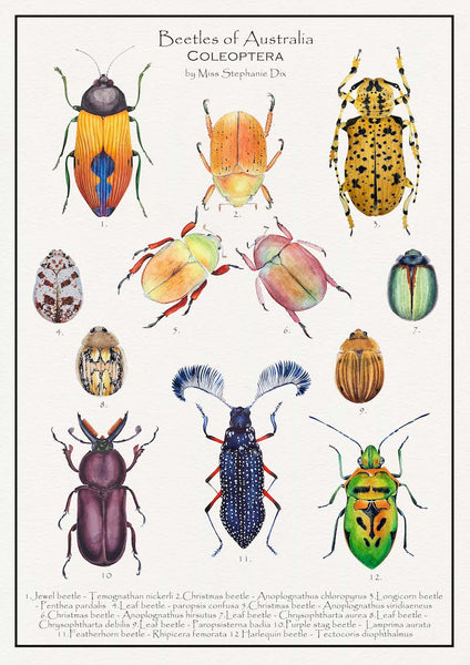 Poster of Beetles of Australia