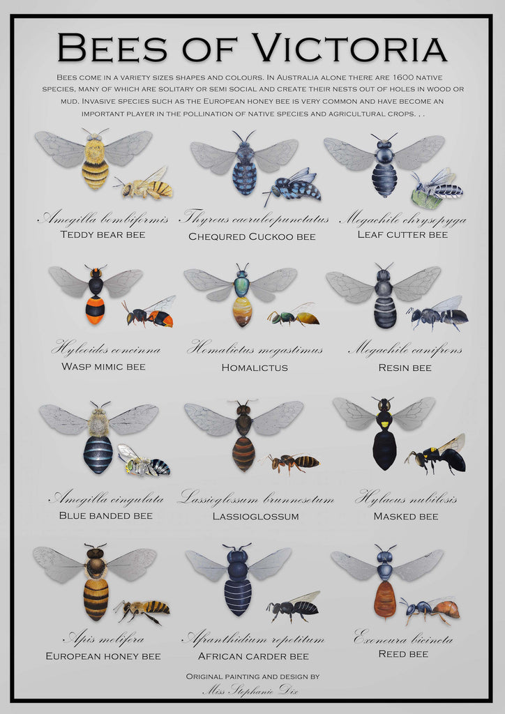 Prints and Artwork: Bees of Victoria